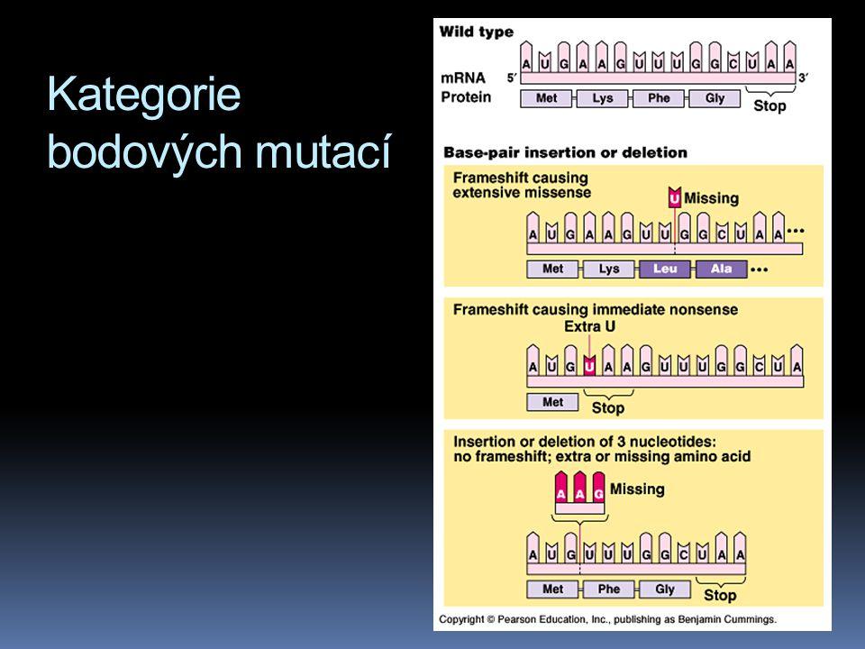 Kategorie bodových mutací