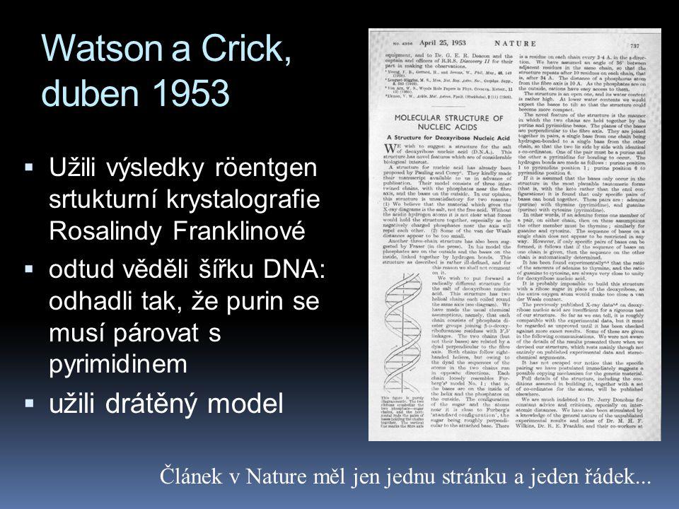 Watson a Crick, duben 1953 užili drátěný model