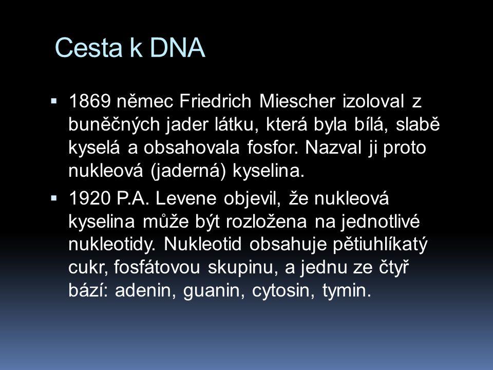 Cesta k DNA