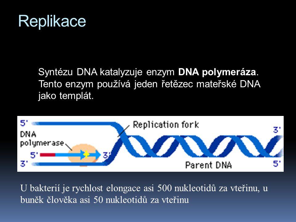 Replikace Syntézu DNA katalyzuje enzym DNA polymeráza. Tento enzym používá jeden řetězec mateřské DNA jako templát.