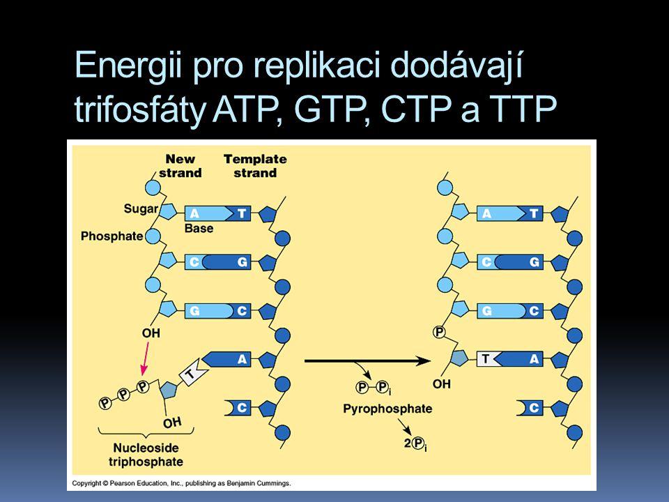 Energii pro replikaci dodávají trifosfáty ATP, GTP, CTP a TTP