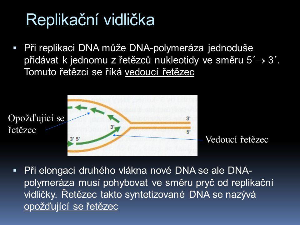 Replikační vidlička