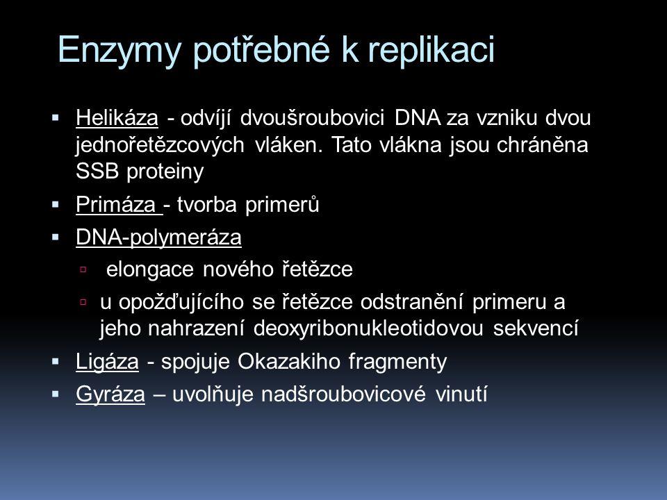 Enzymy potřebné k replikaci