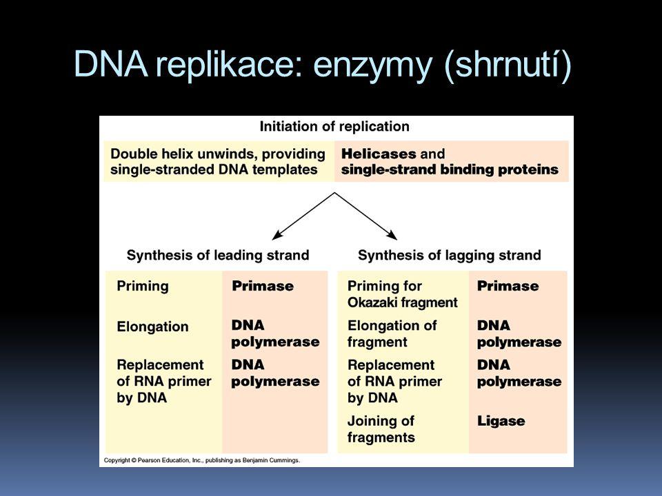 DNA replikace: enzymy (shrnutí)