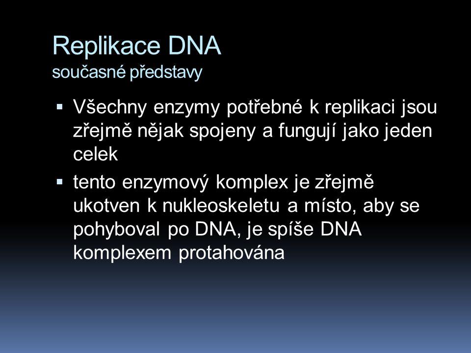 Replikace DNA současné představy