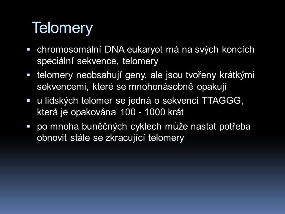 Telomery chromosomální DNA eukaryot má na svých koncích speciální sekvence, telomery.