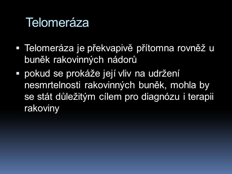 Telomeráza Telomeráza je překvapivě přítomna rovněž u buněk rakovinných nádorů.