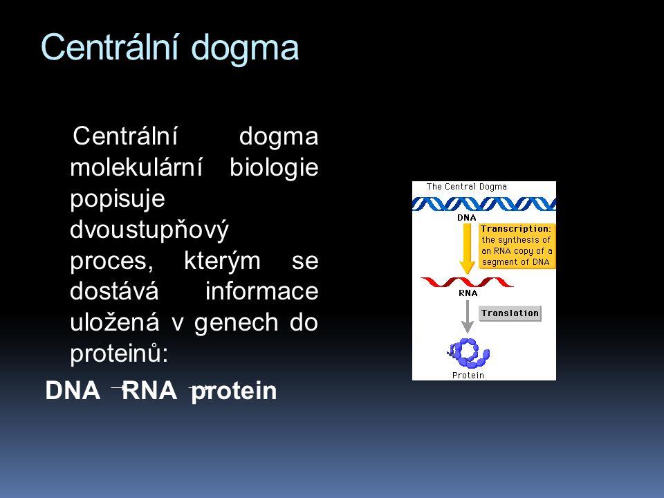 Centrální dogma Centrální dogma molekulární biologie popisuje dvoustupňový proces, kterým se dostává informace uložená v genech do proteinů: