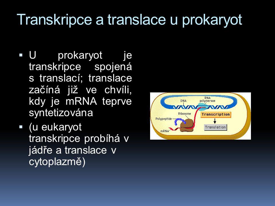 Transkripce a translace u prokaryot