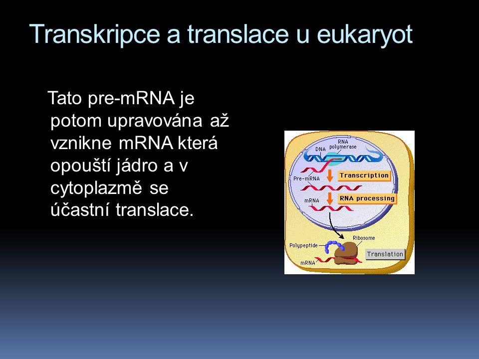 Transkripce a translace u eukaryot