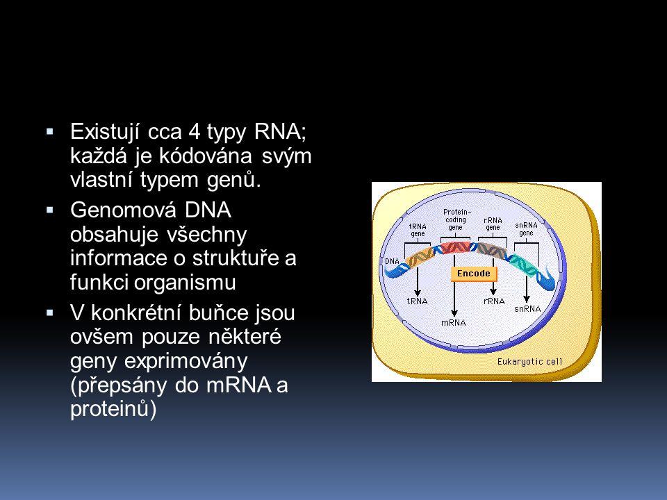 Existují cca 4 typy RNA; každá je kódována svým vlastní typem genů.