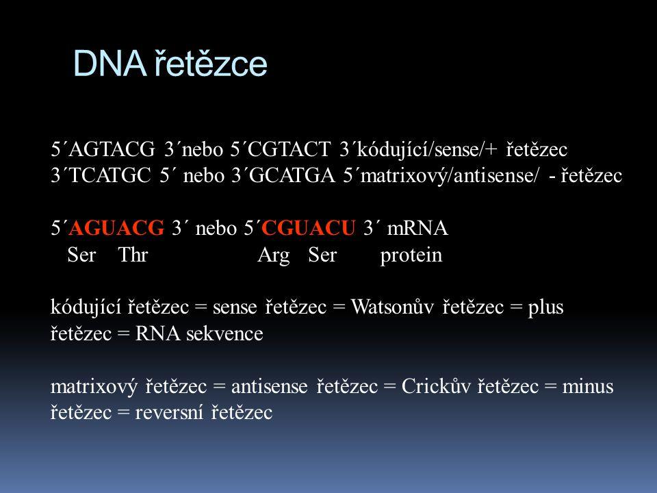 DNA řetězce 5´AGTACG 3´nebo 5´CGTACT 3´kódující/sense/+ řetězec