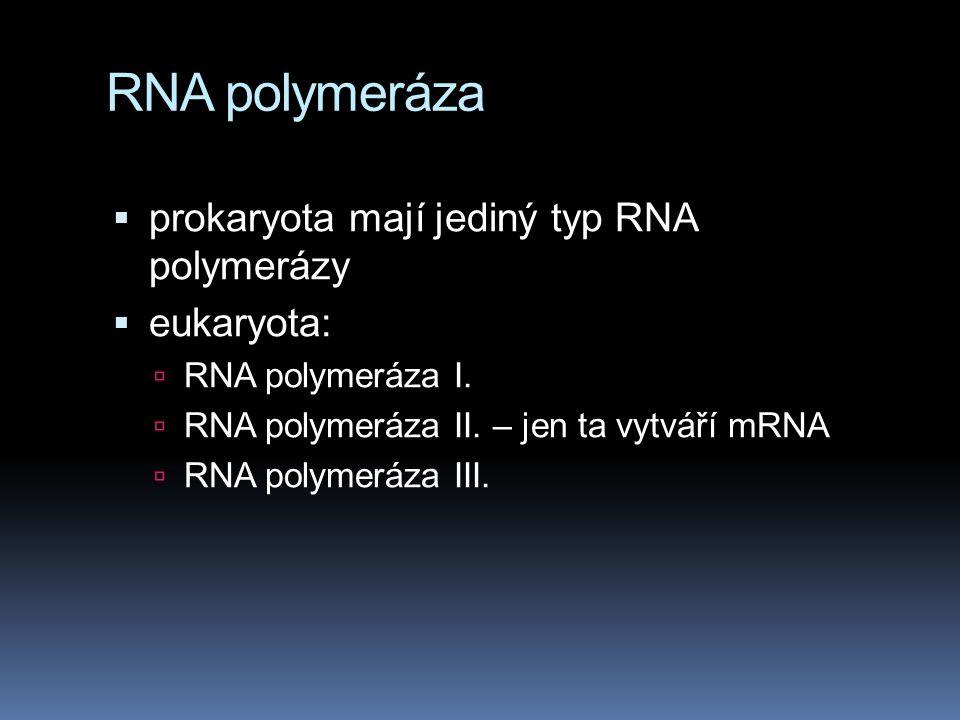 RNA polymeráza prokaryota mají jediný typ RNA polymerázy eukaryota: