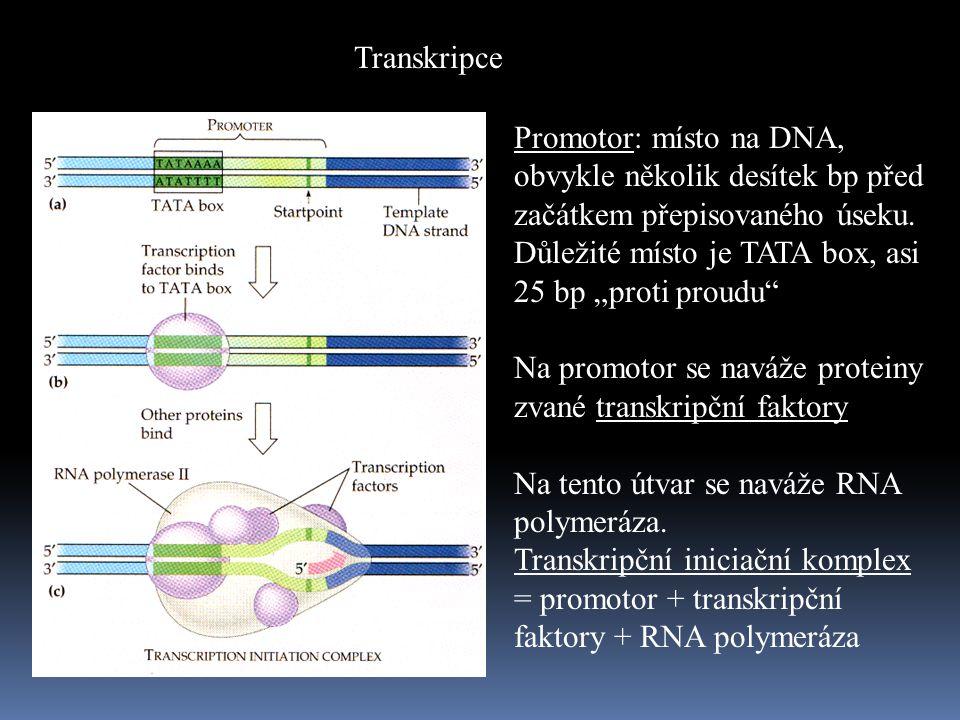 Transkripce