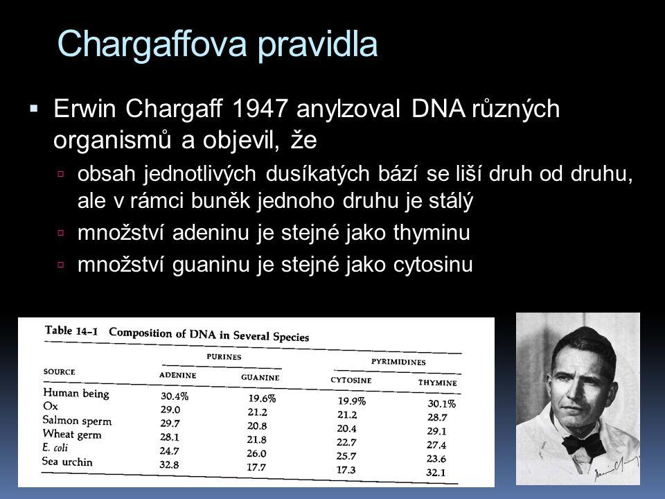 Chargaffova pravidla Erwin Chargaff 1947 anylzoval DNA různých organismů a objevil, že.