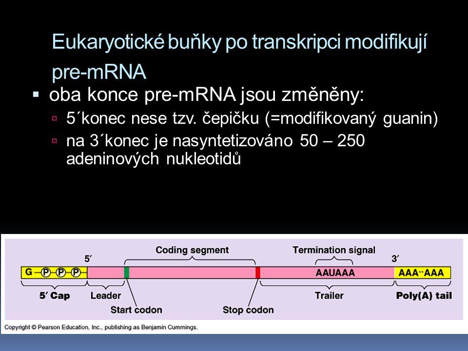 Eukaryotické buňky po transkripci modifikují pre-mRNA