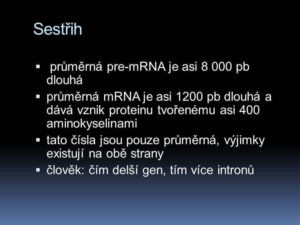Sestřih průměrná pre-mRNA je asi 8 000 pb dlouhá