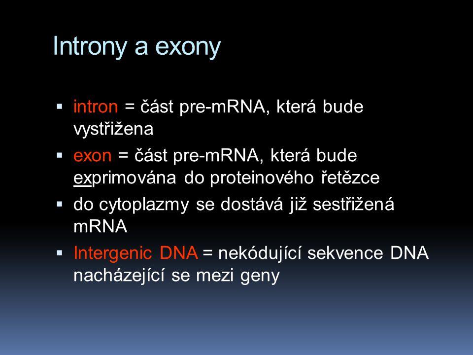 Introny a exony intron = část pre-mRNA, která bude vystřižena