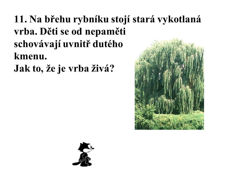 11. Na břehu rybníku stojí stará vykotlaná vrba