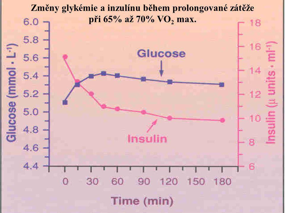 Změny glykémie a inzulínu během prolongované zátěže