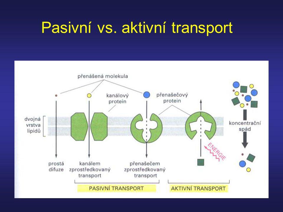 Pasivní vs. aktivní transport