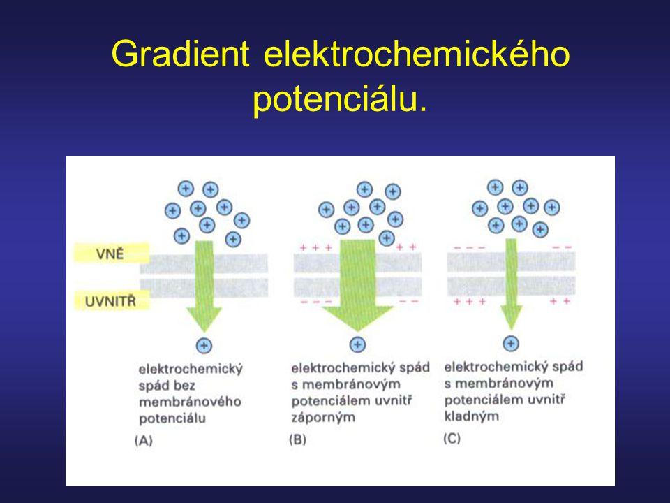 Gradient elektrochemického potenciálu.