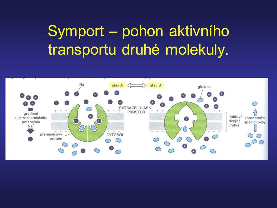 Symport – pohon aktivního transportu druhé molekuly.