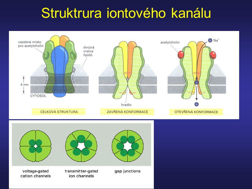 Struktrura iontového kanálu