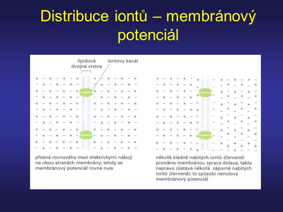 Distribuce iontů – membránový potenciál