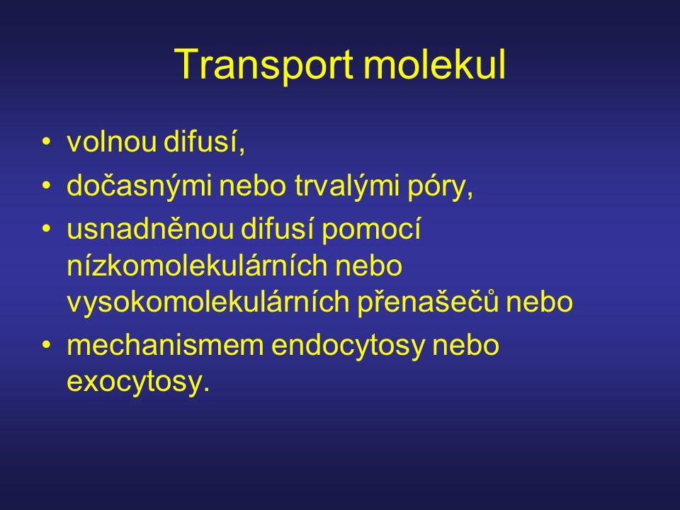Transport molekul volnou difusí, dočasnými nebo trvalými póry,