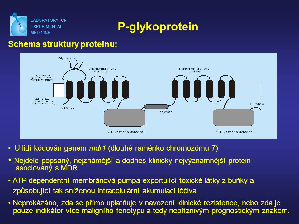 LABORATORY OF EXPERIMENTAL. MEDICINE. P-glykoprotein. Schema struktury proteinu: U lidí kódován genem mdr1 (dlouhé raménko chromozómu 7)