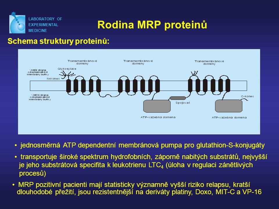 Rodina MRP proteinů Schema struktury proteinů: