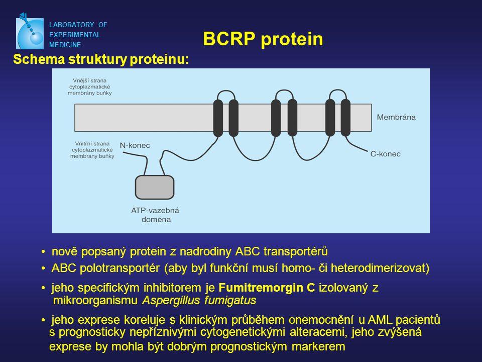 BCRP protein Schema struktury proteinu: