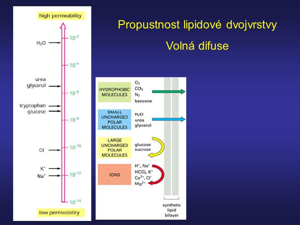 Propustnost lipidové dvojvrstvy