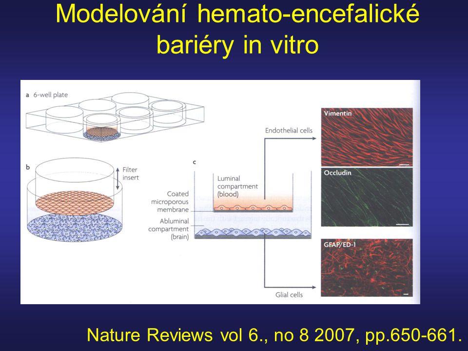 Modelování hemato-encefalické bariéry in vitro