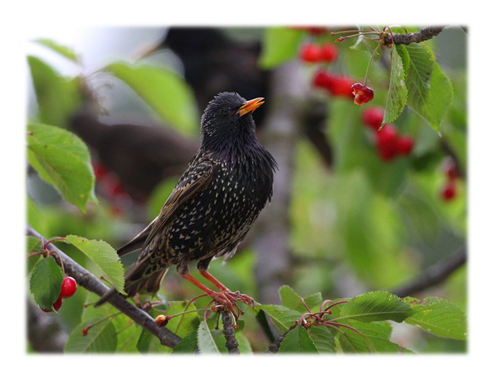 Který pták přilétá na jaře