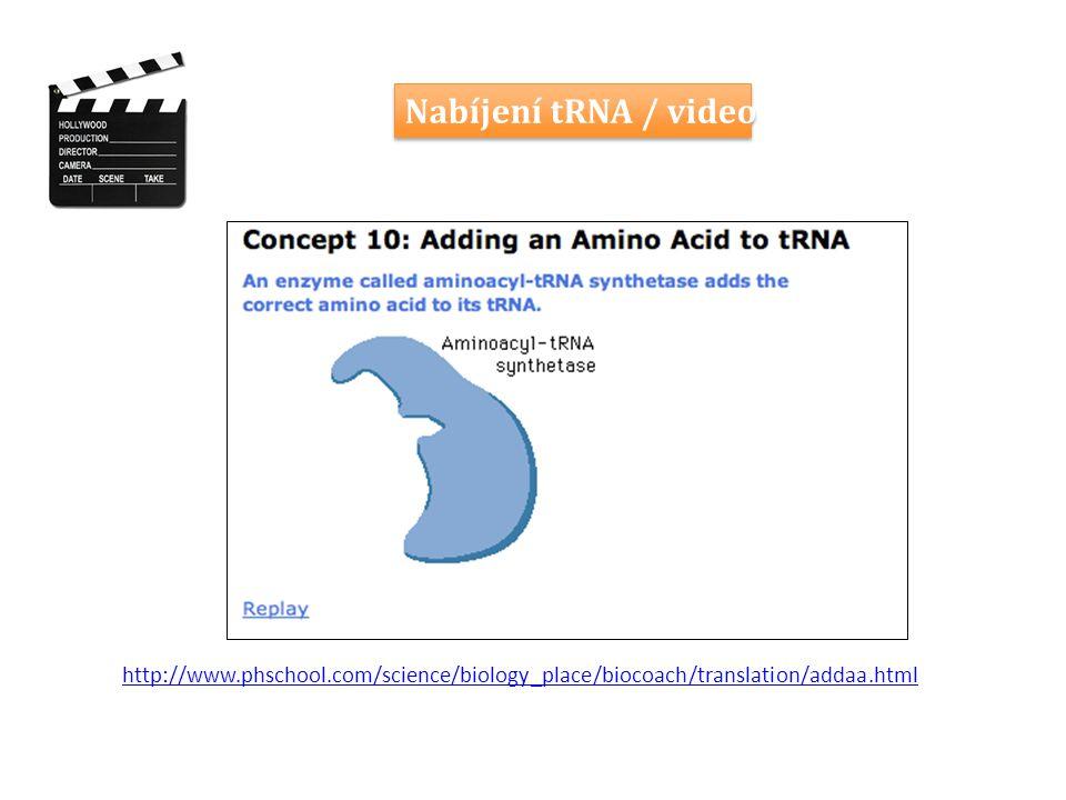 Nabíjení tRNA / video http://www.phschool.com/science/biology_place/biocoach/translation/addaa.html