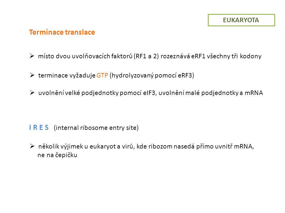 I R E S (internal ribosome entry site)