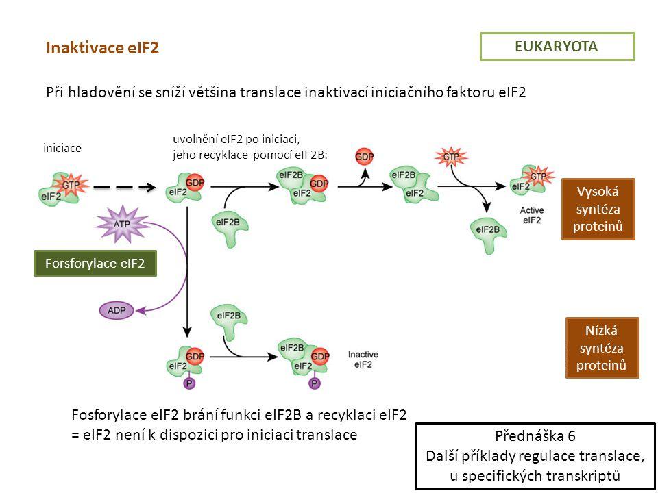 Inaktivace eIF2 EUKARYOTA