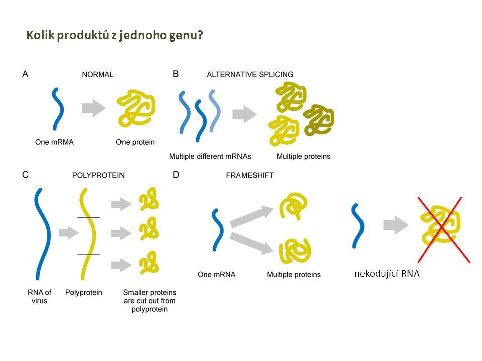 Kolik produktů z jednoho genu