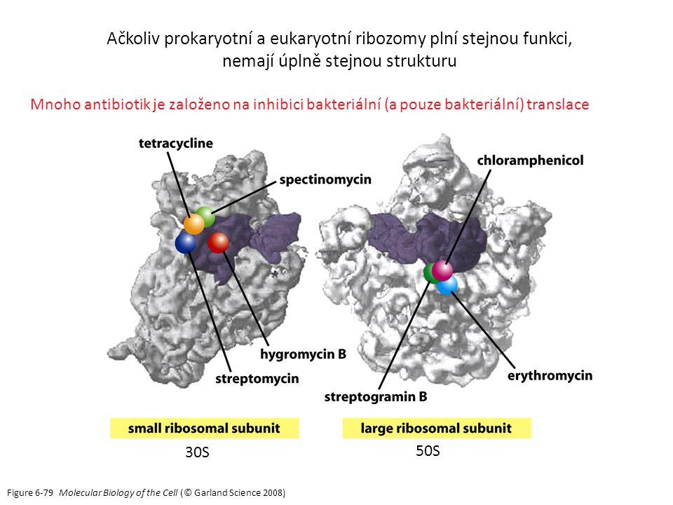 Ačkoliv prokaryotní a eukaryotní ribozomy plní stejnou funkci,
