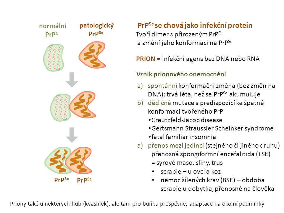 PrPSc se chová jako infekční protein