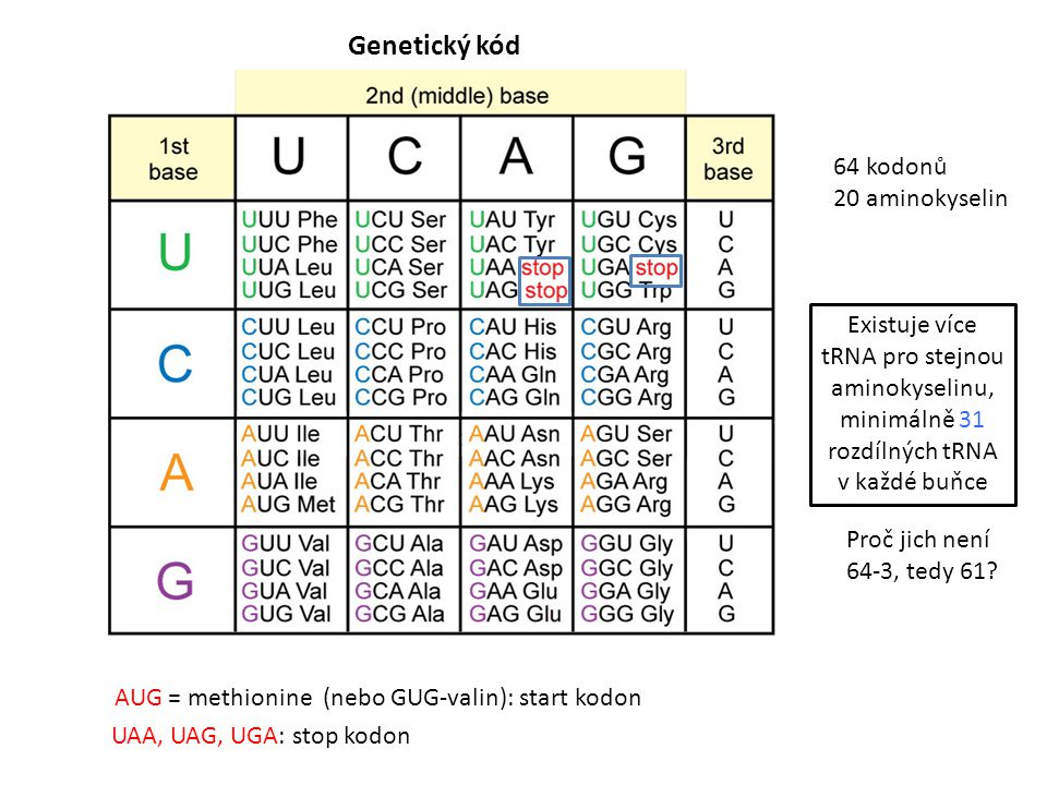Genetický kód 64 kodonů 20 aminokyselin
