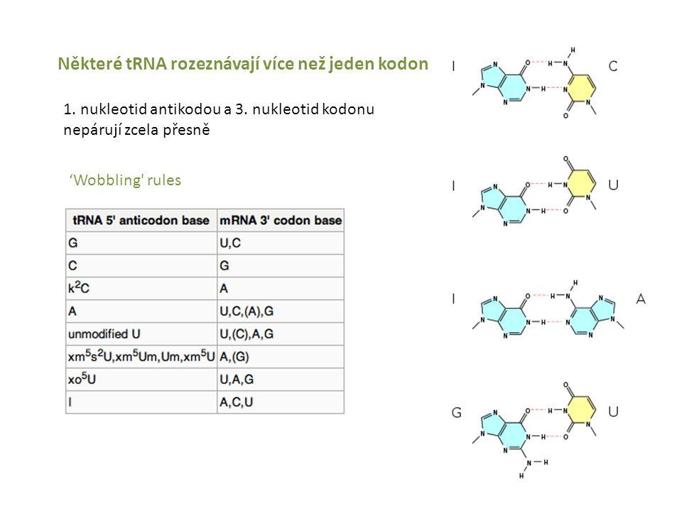 Některé tRNA rozeznávají více než jeden kodon