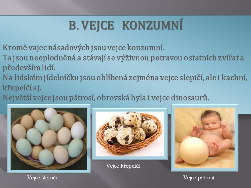 B. VEJCE KONZUMNÍ Kromě vajec násadových jsou vejce konzumní.