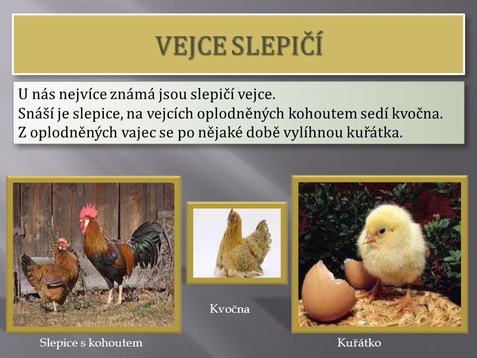VEJCE SLEPIČÍ U nás nejvíce známá jsou slepičí vejce.