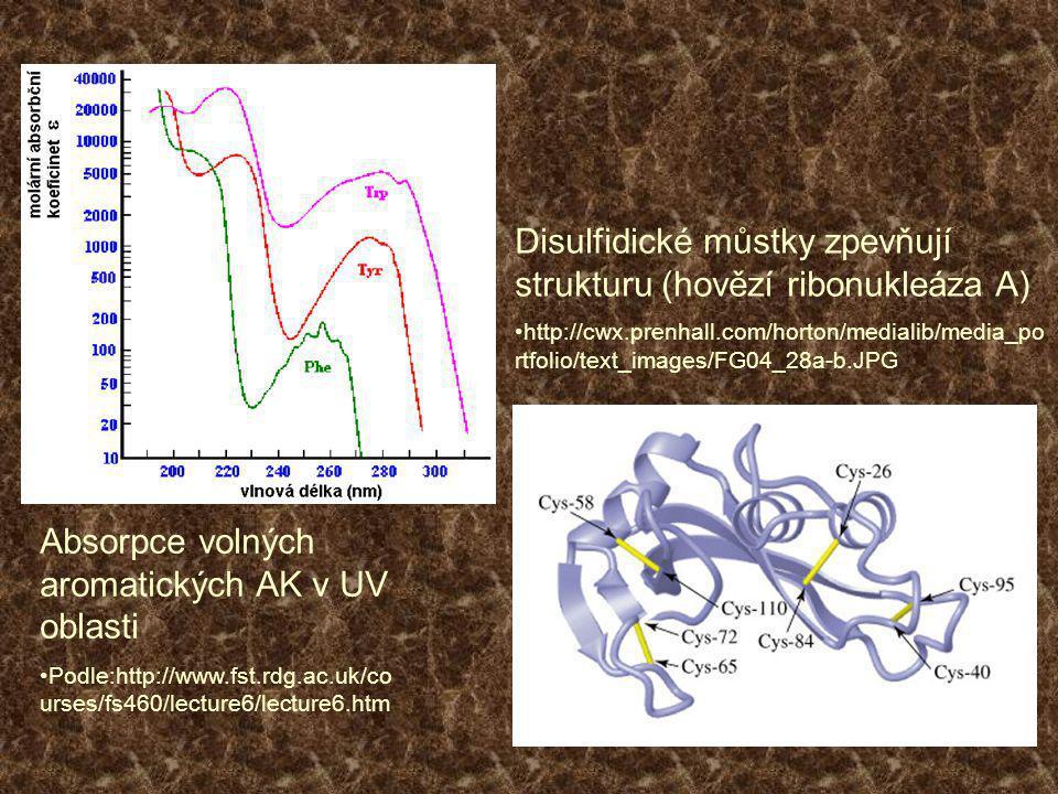 Disulfidické můstky zpevňují strukturu (hovězí ribonukleáza A)