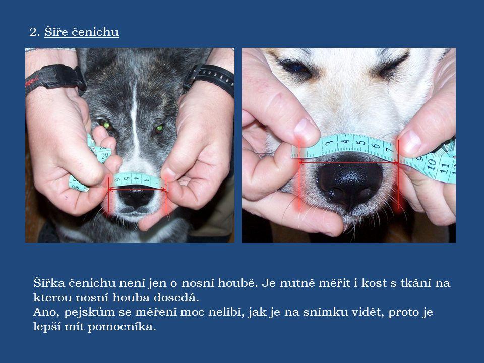2. Šíře čenichu Šířka čenichu není jen o nosní houbě. Je nutné měřit i kost s tkání na kterou nosní houba dosedá.