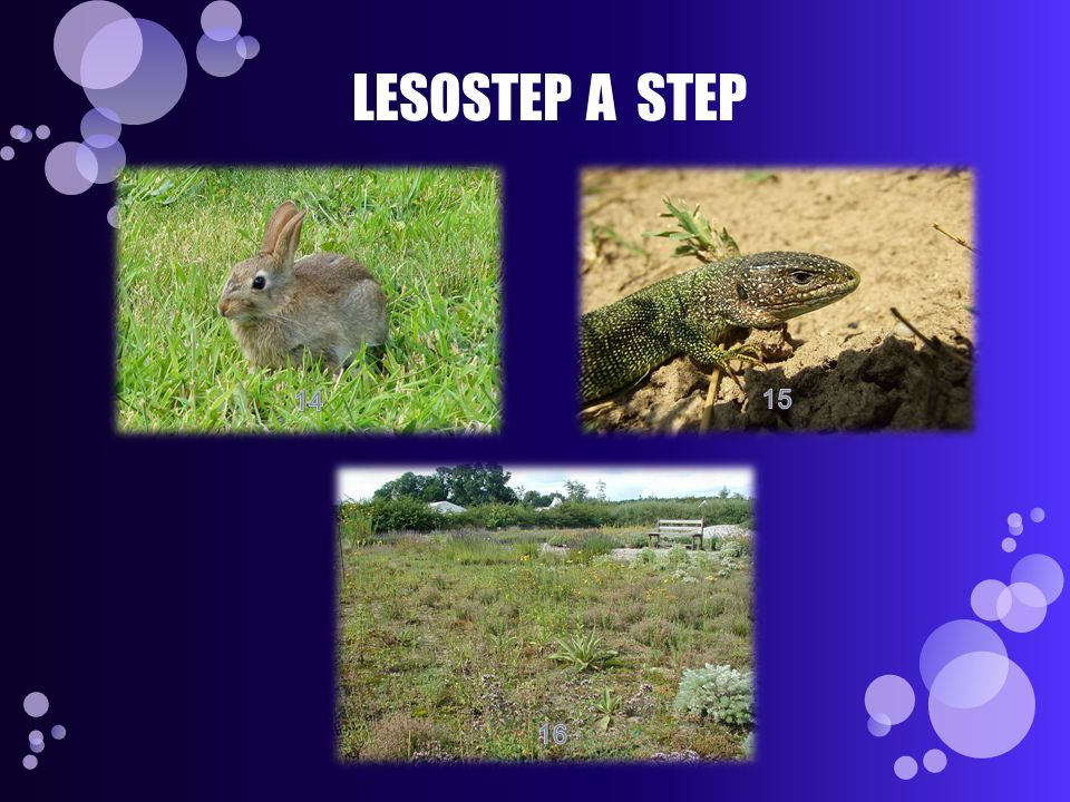 LESOSTEP A STEP 14 15 16