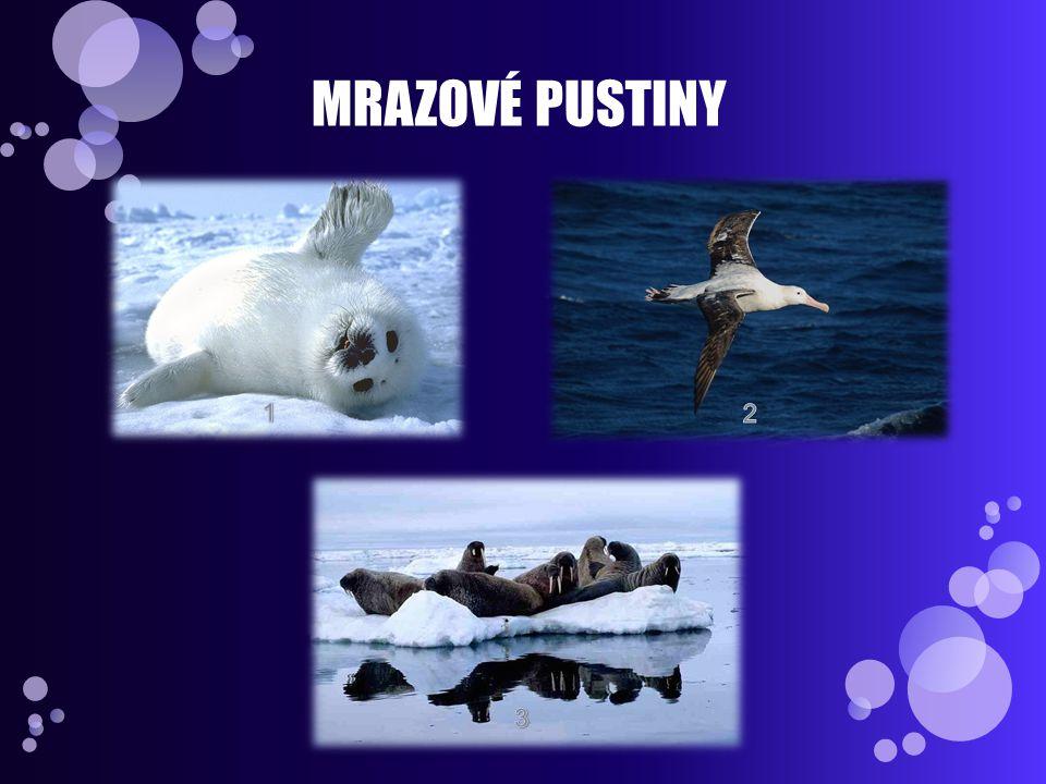 MRAZOVÉ PUSTINY 1 2 3